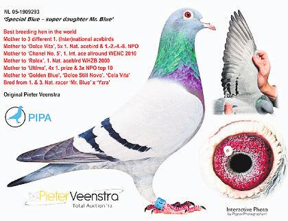 Dolce Vita won 1st International Ace Bird Long Distance WENC Dortmund, 1st National Ace Pigeon of All Holland in the hardest competition to win the WHZB, 1st National Ace Pigeon Long Distance 2010