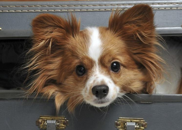 Safety 5 Easy Ways to Prepare Pets If you are like millions of animal owners nationwide, your pet is an important member of your household. Unfortunately, animals are also affected by disaster.