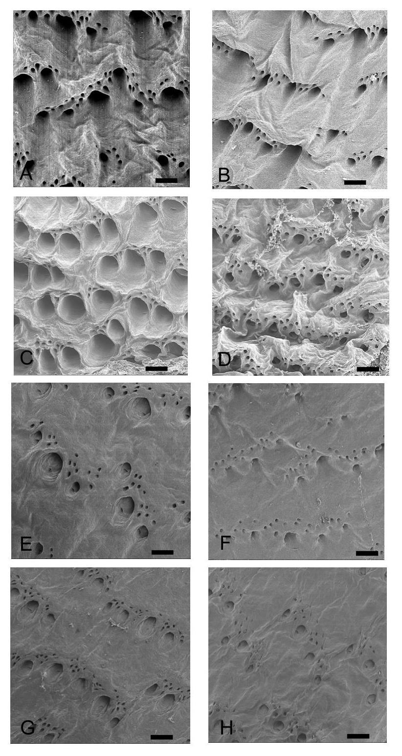 Fig. 1 SEM views of yeso sika deer skin and vegetable tanned leather grain Raw skin (A-D), vegetable tanned
