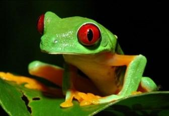 Frogs and friendly bacteria, it s not just skin deep Understanding the interactions of frogs and their symbiotic bacteria to improve ex situ husbandry of amphibians and develop use of probiotic