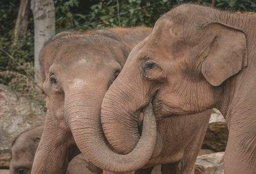 Quantifying the social relationships of captive Asian elephants (Elephas maximus) Why is the research important?