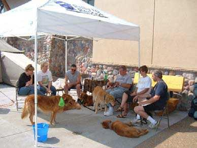Love a Golden Rescue has been a successful volunteer organization for over seven years. It is with the help of all our volunteers that has lead to this success.