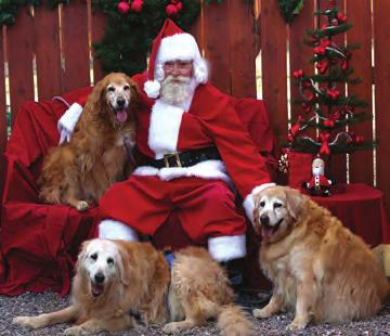 It is a day when you can make a contribution and know the entire amount will support the Golden Retrievers we all love. Thanks to the Foundation, there are no credit card processing fees.