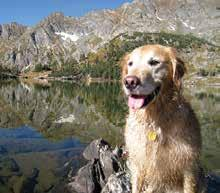 GRRR 2016 Calendar Photo Contest! The Golden Retriever Rescue of the Rockies 11th Annual Photo Contest is now open! Your Golden could be featured in the 2016 calendar!