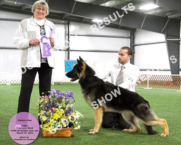 DOGS Puppy 6-9 Mos. DOG 5 1 st MAJA'S ROCK N ROLL DN434818/01 07/03/15 By: Gch.