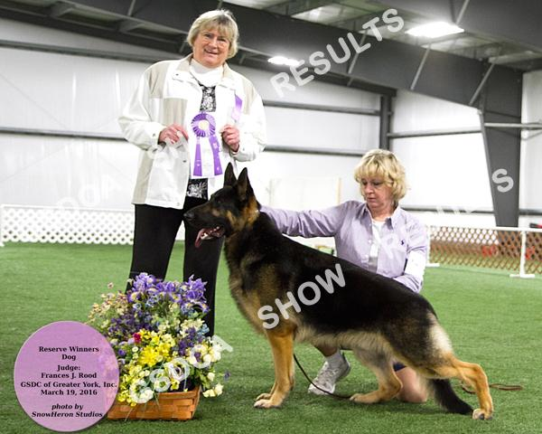 12-18 Mos. DOG GSDC of Greater York Specialty, March 19 th 2016 23 RW MILLERTIME'S AMERICAN GIGOLO DN417559/03 12/11/14 By: Gch. Karizmas Morocco Kaleef Von Loar X Ch.