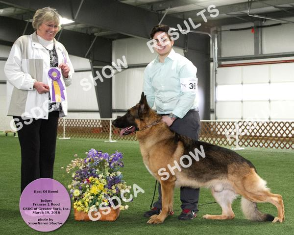 BEST OF BREED 46 Abs GCH. AMBER'S MATERIAL GIRL V CARMA DN348119/04 09/14/12 By: Ch. Alkarahs For Your Entertainment X Ch. Ambers Pleasure v Joels Breeder: B. Amidon Owner: Dara I.