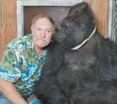 Michael Crichton, renowned author and filmmaker, has recently joined the Gorilla Foundation Board of Directors.