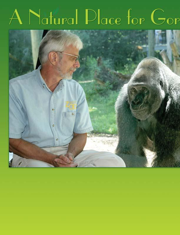 Jan Rafert and Cassius the gorilla observe one another at the Zoo.