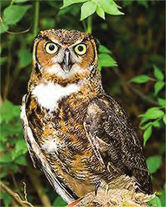 Social Behavior Owl Anatomy Owls are solitary animals, and they spend most of their time alone. When it comes time to look for a mate, some owls use a variety of calls to attract others.