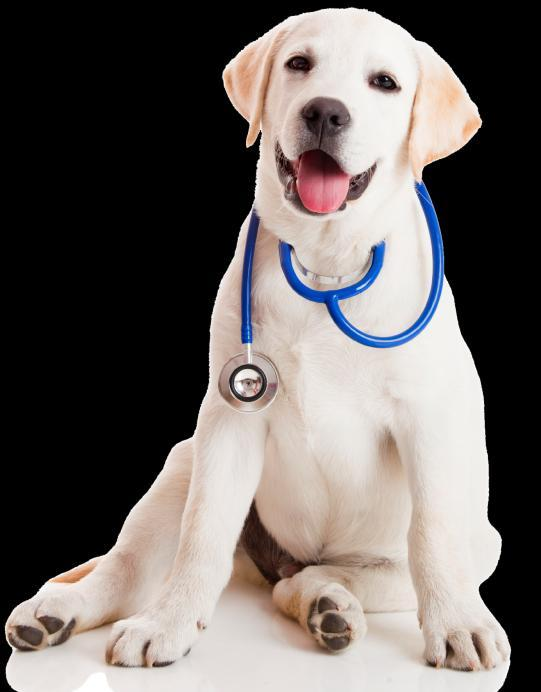 22 like the first phone call a kennel owner might make to the vet to discuss a certain condition in their dogs.