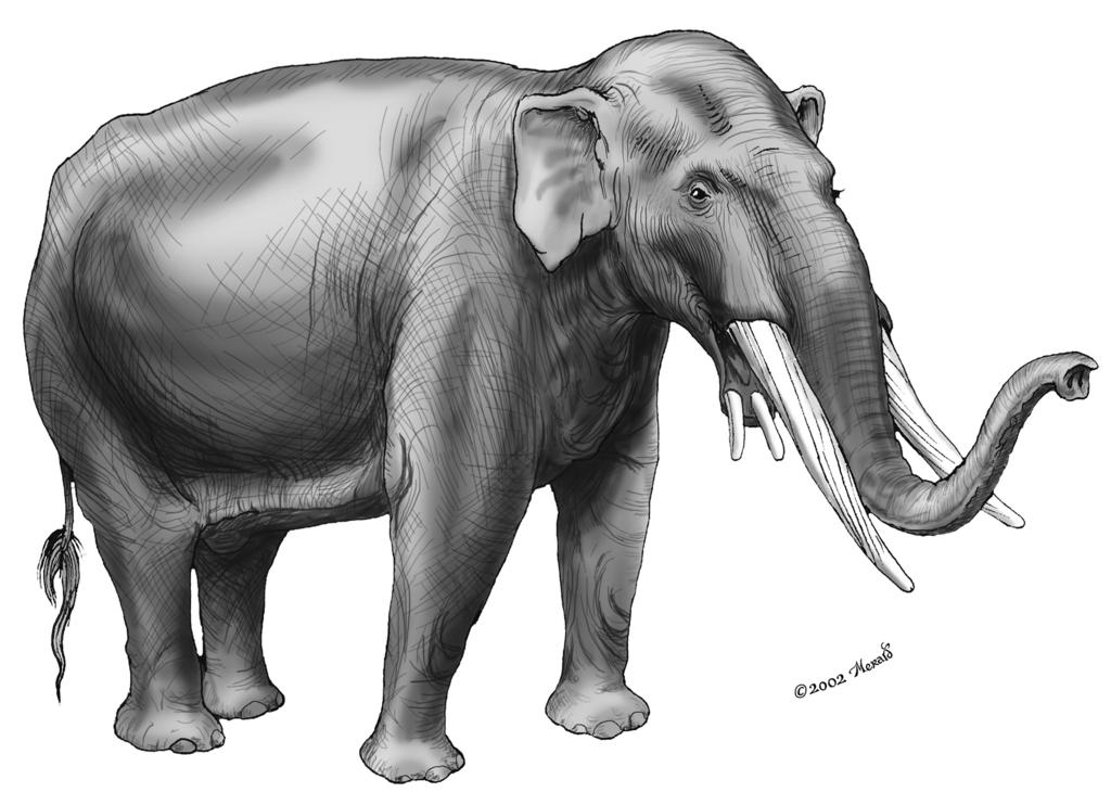 Sketch the fossil: Spiraltusker (Rhynchothere: RINK-o-theer) Spiraltuskers had a spiraling band of enamel around each of its large upper tusks.