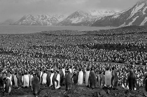 Where are Penguins Found?