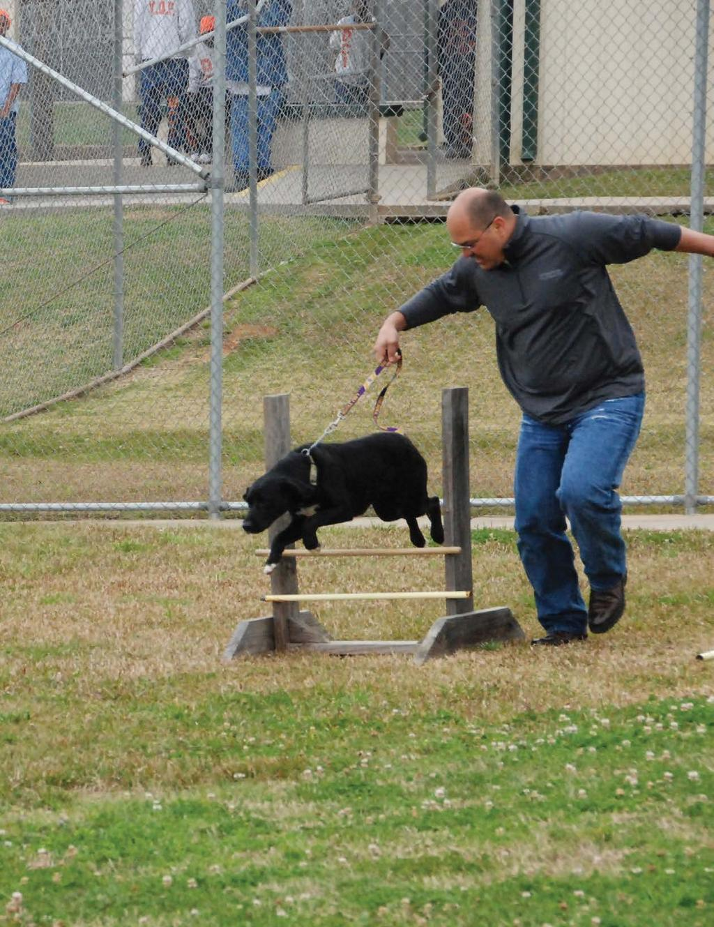 ances: The dog covers the agility course with gusto, veering around weave poles, jumping hurdles, pushing through tunnels and tires, bounding over teeter boards, then racing back to the man waiting