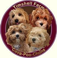 Timshell Farm 2017-2018 Calendar of Litters CavaPooChons & Petite Goldendoodles List of Litters with Puppy Go-Home Dates Below is our calendar of puppies listed by the Mother s name, with estimated