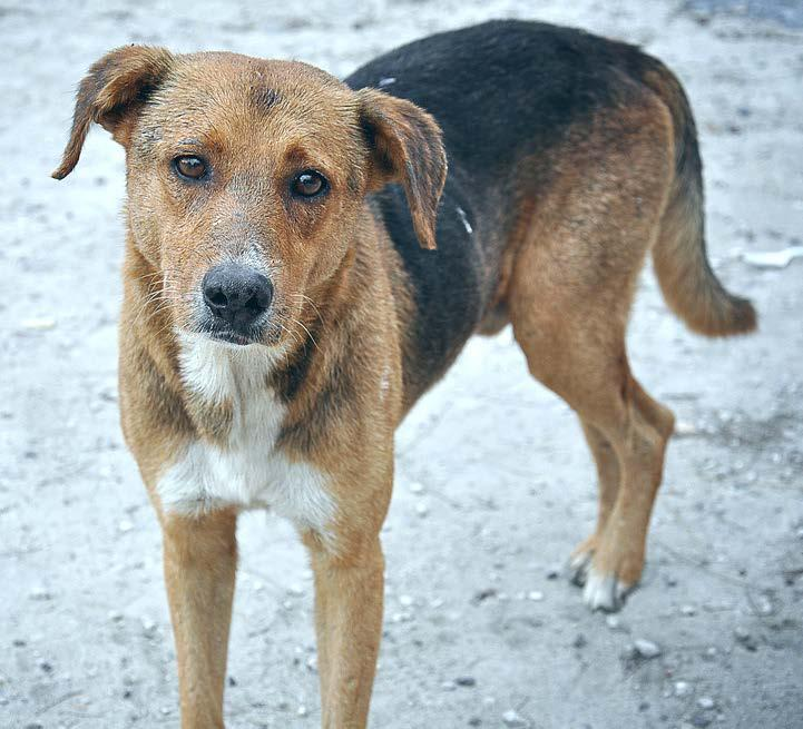 Homeless Animals Stories Story 1: Lilly s Story Hi, my name is Lilly and I lived with a wonderful family. My family let me run all around the neighborhood.
