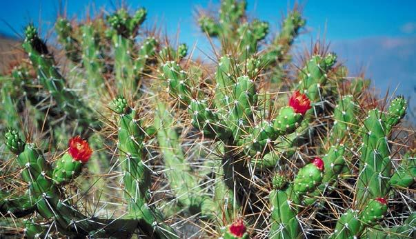 Cactus spines are an adaptation to keep animals from eating the plant. Table of Contents Introduction... 4 Survival of the Fittest... 6 Plant Adaptations... 10 Animal Physical Adaptations.