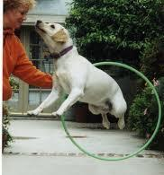 Some dogs can be frightened at first with a new object and if you try to go too fast you may make your dog scared of the Hula Hoop. Be sure to reward your dog with treats, toys or praise at each step.