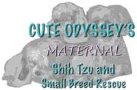 Cuteodyssey Maternal Shih Tzu Rescue and Small Breed Rescue Adoption Contract.
