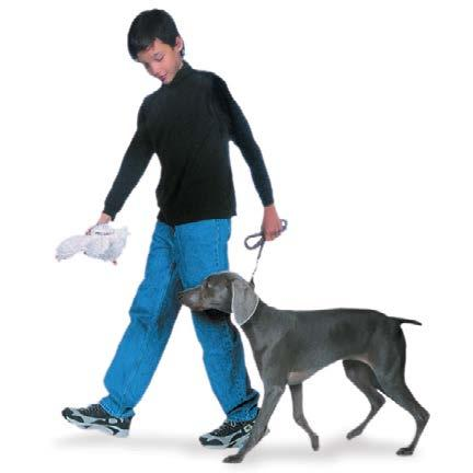 HEEL Some trainers prefer to say Let s go or Forward when they train this easy way of walking together. Whatever command you choose, always use the same word. Start with your dog standing next to you.