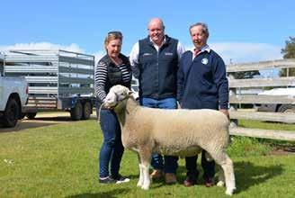 Whether that was a catalyst towards getting more fellow stud breeders to attend and bid on their stud ram offering is unknown, but there was a dramatically improved response.