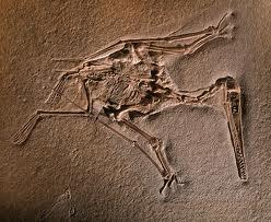 The Archaeopteryx was also the first bird, though later came another. It was called the Rahonavis.