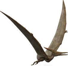 Also, if they soar in a circle on Pterosaurs have a structure much like a bat The Draco Lizard was also a flying reptile. It uses the flaps of skin on its sides to glide.
