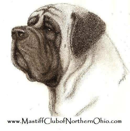 Membership Application Mastiff Club of Northern Ohio MEMBERSHIP APPLICATION NAME(S): ADDRESS: CITY: STATE: ZIP: PHONE: CELL PHONE: EMAIL: KENNEL NAME/WEBSITE: