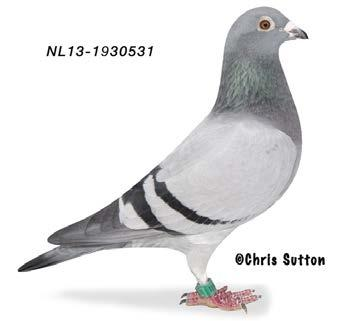 3 THE RACING PIGEON 4 NOVEMBER 2016 make that he now really have to take care of his self, and keep only a small team of his loved great Champion collection.