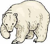 Directions: Read the passage below and answer the question(s) that follow. The King of the Arctic Did you know that a polar bear cub weighs 1 1/2 pounds at birth?