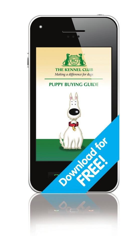 Kennel Club direct, along with any advice you may need.