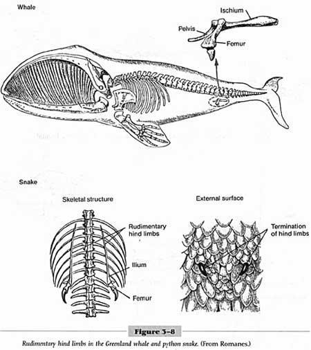 Comparative embryology Comparative embryology shows similar embryological features among certain organisms.