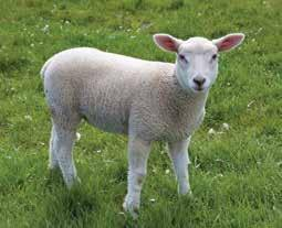 parasites in grazing lambs on six sheep farms in southern Ontario Lambs Year Product Number of observations % efficacy 95% confidence