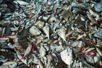 Introduction A global problem Most commercial fisheries have to deal with bycatch, which can be broadly defined as anything that a fisherman does not mean to catch, including fish, turtles, pieces of