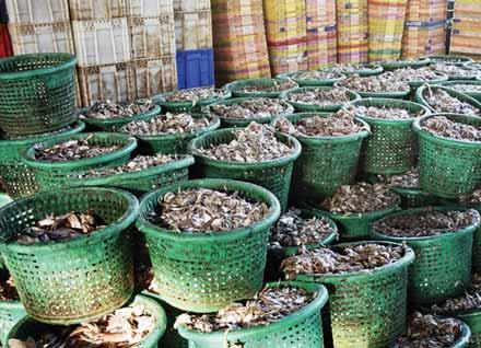Baskets of trash fish ready for sale. Trash fish is a threat to sustainable fisheries and food security because it includes juvenile fish. What is trash fish?