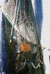 trunks, from the trawl. However, in the majority of instances the real cause of this loss is poor TED selection or operation in a specific area of the fishery.