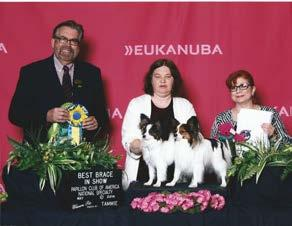 Then May 11 th with his co-owner he picked up a BOB and a Group 4 in the regular AKC class.