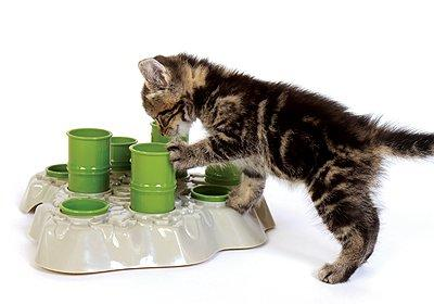 playing with the container; then as your cat gets better and better at getting the food