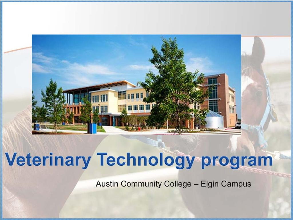 The Veterinary Technology Program is located at the ACC Elgin campus.