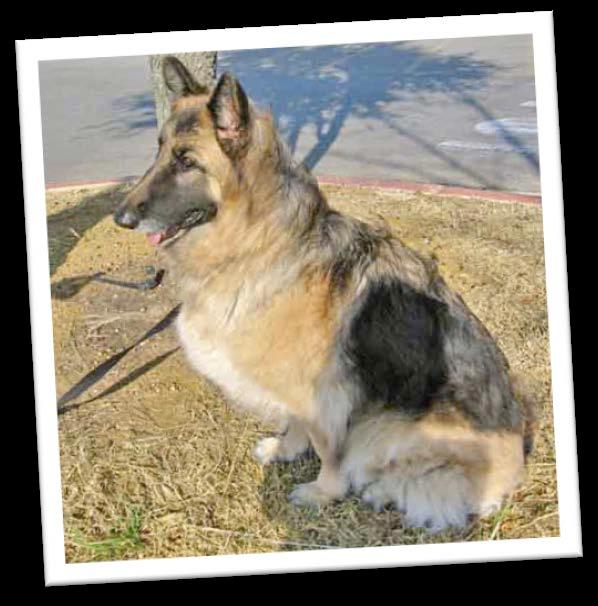 com is a website that gives money to your charity or school of choice when you shop online. All you have to do is choose Austin German Shepherd Rescue, and they will donate money while you shop!