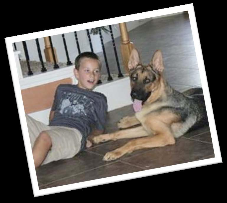 Happy Tails Axl s Story My name is Axl and I m a 1 ½ year old German Shepherd.