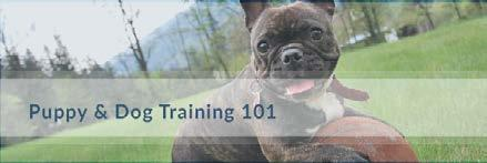 Puppy and Dog Training 101 Don t Take Good Behaviours for Granted The best way for your puppy to learn to do what you want is by rewarding them when they have done something acceptable.