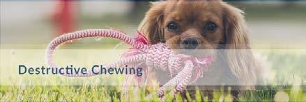 Destructive Chewing Controlling the destructive chewing propensities of a puppy or untrained dog is of utmost importance for most owners.
