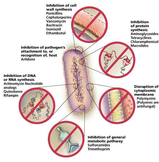 How Antimicrobial Agents Work The 5 most common mechanisms of action of antimicrobial agents are: Inhibition of cell wall synthesis Damage to