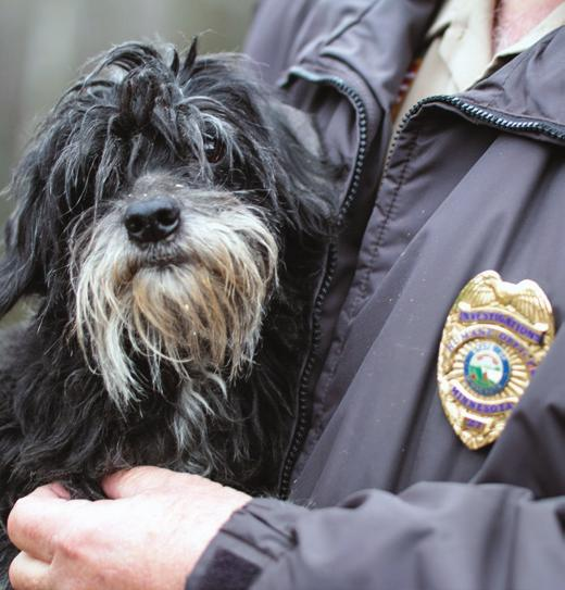 expertise to support humane cases that result in the seizure or surrender of animals. Animal Humane Society removed 806 animals from dangerous or unhealthy conditions.
