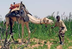 In east Africa, livestock and camels can be all that stands between life and death for the nomadic communities during the long and frequent droughts. Animals are the very backbone of these societies.