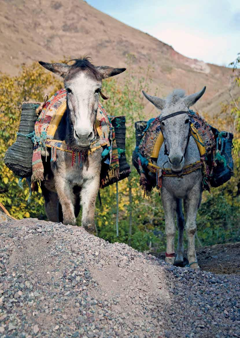 According to the UN Food and Agriculture Organization, there are at least 100 million working donkeys, horses and mules worldwide.