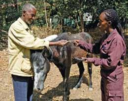 In an impoverished country like Ethiopia, many owners of working animals simply cannot afford to buy new equipment and are forced to improvise.