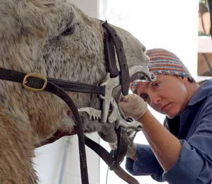 Training SPANA s veterinary programme provides treatments for hundreds of thousands of sick and injured donkeys, horses, mules and camels.