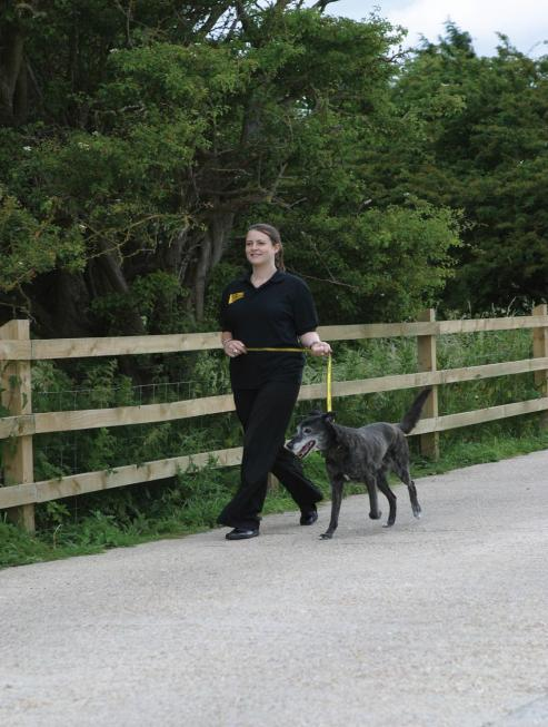 How to have a well behaved dog Top Tips: Training should be FUN for both of you Training will exercise his brain Training positively will build a great relationship between you Training should be